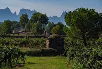 Plantejament estratègic per a l'estructuració de la ruta del vi del Bages