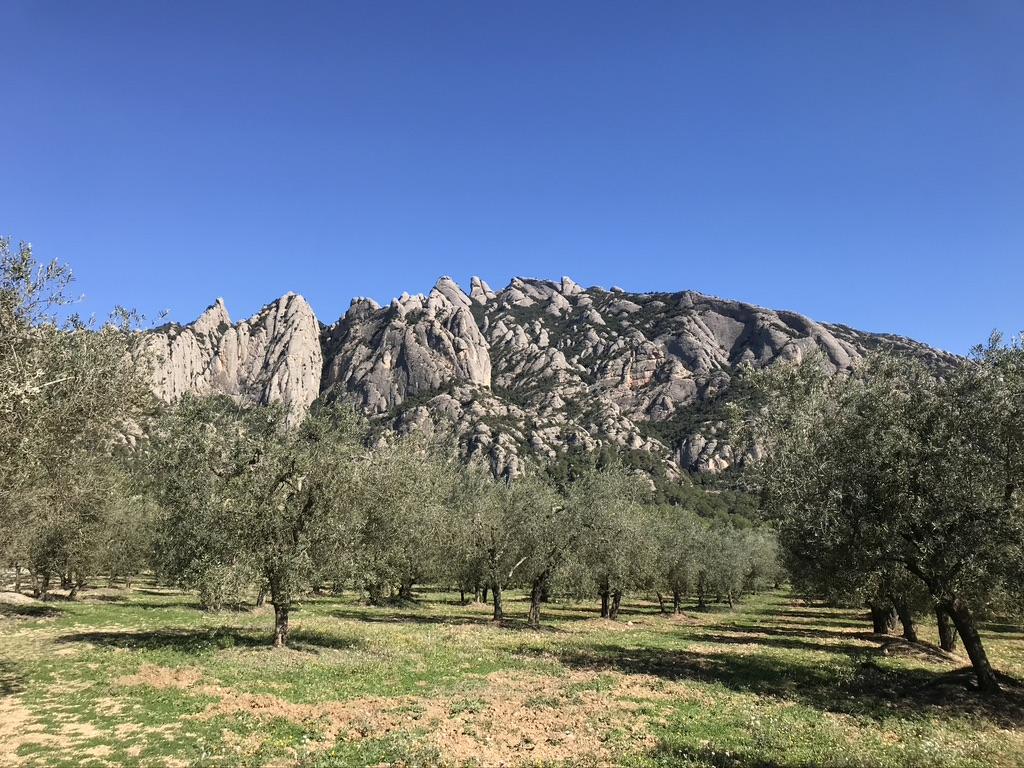 Pla per a l'estructuració d'una oferta d'oleoturisme competitiva per als municipis de Collbató, Piera i del Bruc