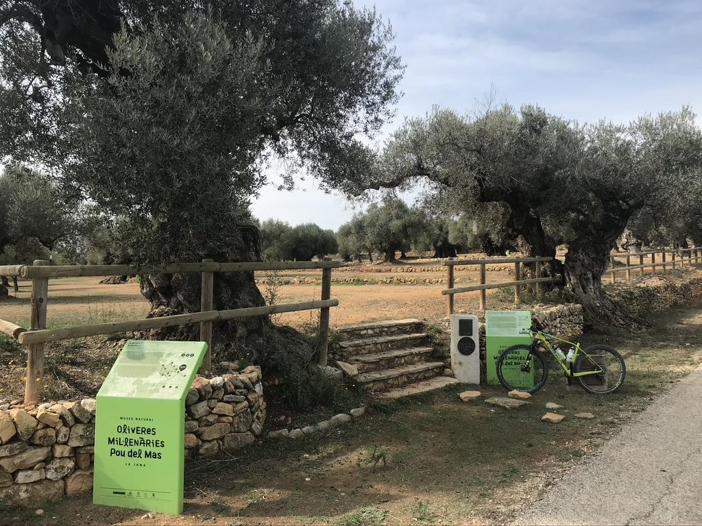 Itineraris cicloturisme oliveres mil·lenàries
